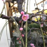 春がやって来ます。