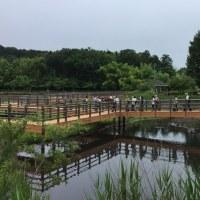 2017年6月25日(日)「ネギをしょっているカモ?」  in 関市中池