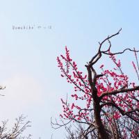白い花咲く散歩道