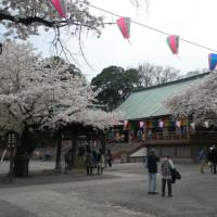 川越・喜多院の桜