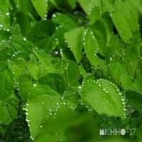 平成29年5月26日(金) 雨の赤城自然園♪