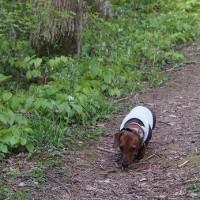 桜ロードをお散歩です