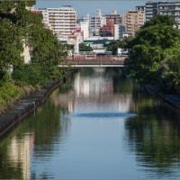 朝の新堀川