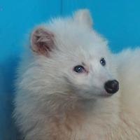 白い動物たち(^_-)-☆