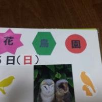 2度目の『掛川花鳥園』