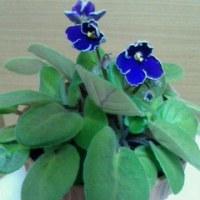 花が咲きました〜o(^ ∇^o)(o^∇^)o