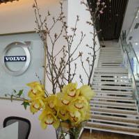 名駅北に春がやってきました