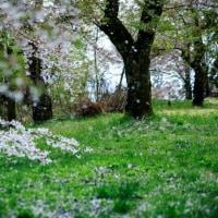 詩『春につつまれて』