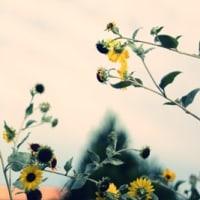 秋を、、さがして、、。