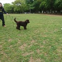 公園の新しいお友達