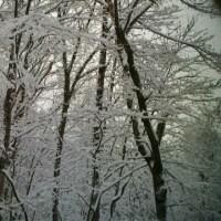 真っ白な木々