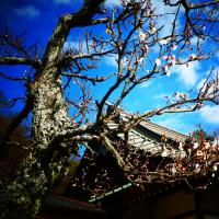 『梅たより』 王福寺