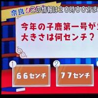 子鹿が生まれた時の大きさは?・・(^◇^)