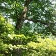 平標山~仙ノ倉山
