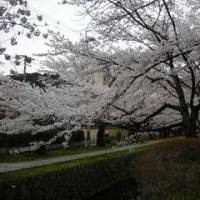 【2008春】京都一人お花見 ※自己満足的な長文