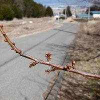 ♫春は名のみ~の 風の寒さや~♫