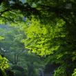 夏本番 早朝の妙本寺にて