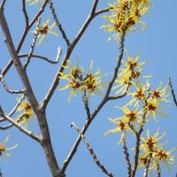 黄色い花が春を告げて