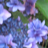 明月院で川のせせらぎに感動した。あじさいは最後の花をさかせていた。