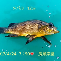 笑転爺の釣行記 4月24日☀ 長瀬・久里浜