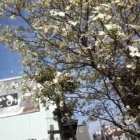 なごみ大庭園「えぇ?」2
