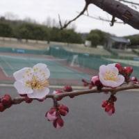 春がすぐそこまで来ています。
