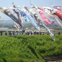 【実施報告】5月5日(金) 鈴川の鯉のぼり