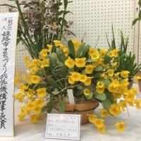 2017兵庫ラン展