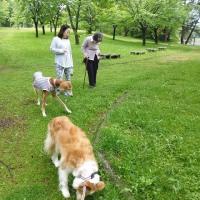 母との食事会とT公園散歩