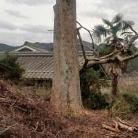 無残な巨木