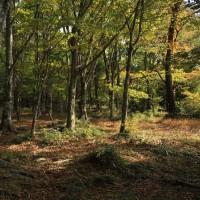 秋彩の森 蔦紅葉