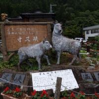 近況注意報 0625 大井川鉄道沿線篇