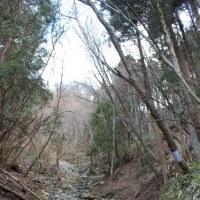 2017.3.26 妙見谷 カタクリ尾根