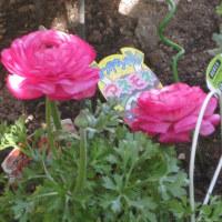 2月11日撮影の我が家の花壇
