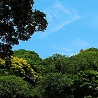 『初夏の色』 高来神社