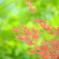 小さい秋2