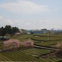 富士裾野ウォーク