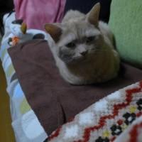 続)執着するネコ