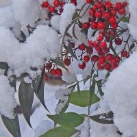 雪の朝に3
