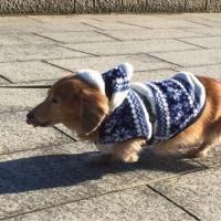 ミッキーの暖かウエアo(^_^)o