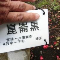 椿で漢字の勉強を!