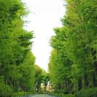 「今日の日記、明日は昭和の日なので武蔵野御陵の新緑の写真」