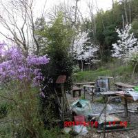 うちの裏山での「お花見」はいかがですか。