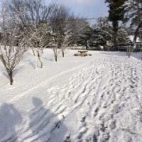 南公園雪祭り