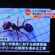 7/28 ヒアリ対策の提案 日本の蟻を港に放つ