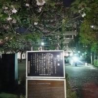 闇夜に浮かぶ姥ヶ池の花筏 170425