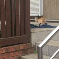 猫三昧 Cat-loving - 外猫 : 待ち人 waiting for you