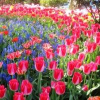 凡人の春の夢