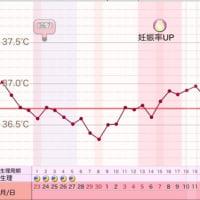 D33 高温期18日目