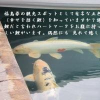 自然と触れて。。。鉾田市はメロンの生産量が日本一